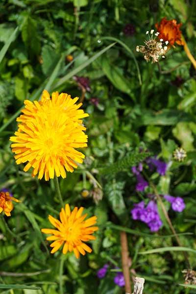 Artikelbild Blumenwiese im Allgäu Tannheimer Tal