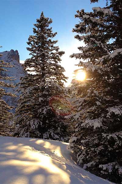Artikelbild Schneeschuhwandern unberührte Winterlandschaft