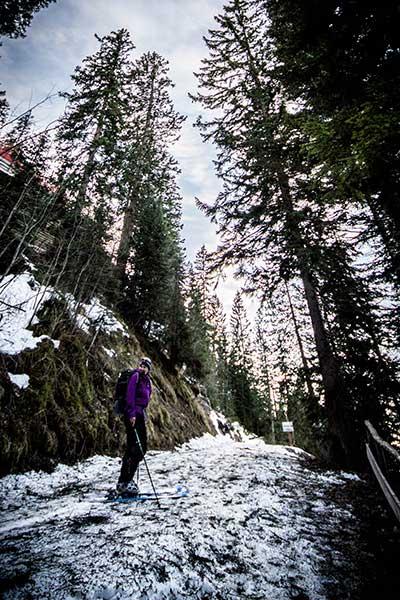 Artikelbild Steinbock Bergtouren Bergwanderführerin Steffi