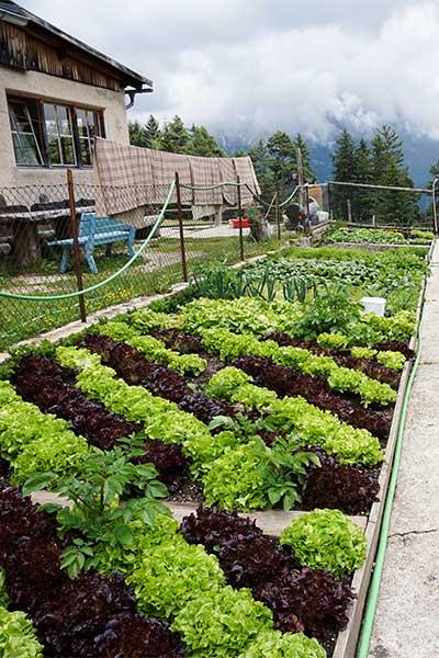 Artikelbild Südtirol Rosengarten Biogarten Tschafonhaus