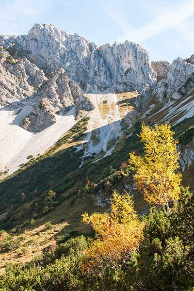 Beitragsbild Herbst im Tannheimer Tal mit Steinbock Bergtouren