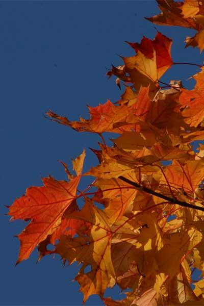 Artikelbild Farbenfroher Herbst in den Bergen